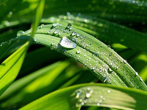 Увлажняющий уход — Прозрачная роса